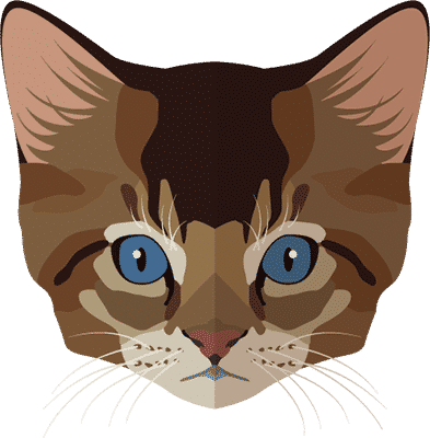 חנות חיות - חתולים