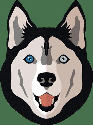 חנות חיות - כלבים