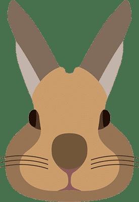 חנות חיות - מכרסמים