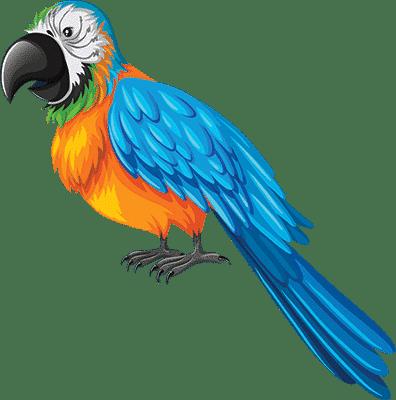 חנות חיות - ציפורים