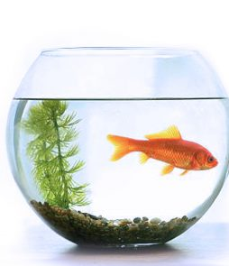 Fish-Bowl-big-size