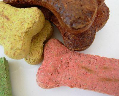 המדריך לבחירת המזון המתאים עבור הכלב שלכם