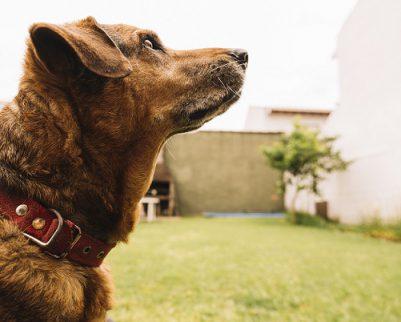 מה תפקיד המלונה לכלב?
