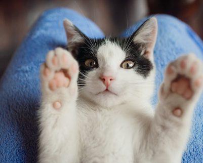 מדוע צריך מתקן גירוד לחתולים?