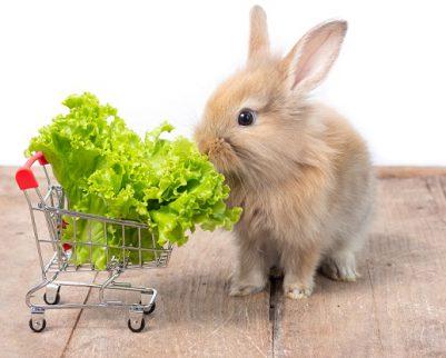חנות חיות ביהוד