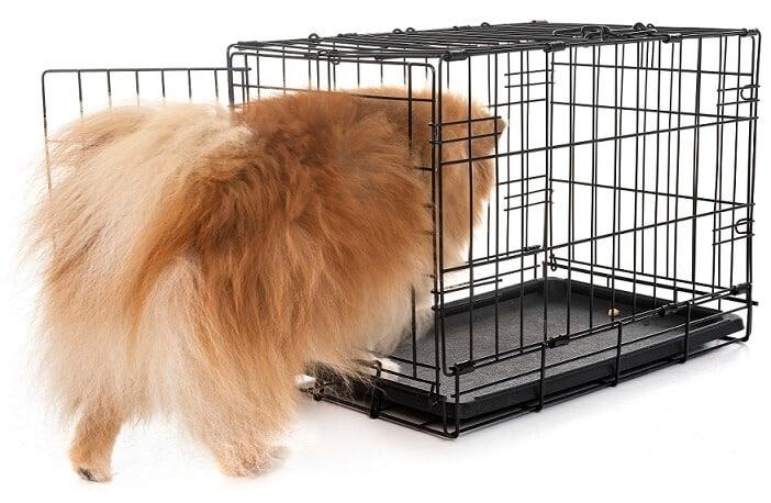 איך לבחור כלוב אילוף לכלב