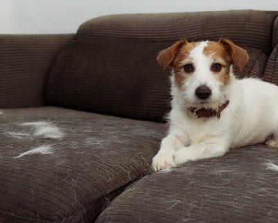 הכלב לועס רהיטים
