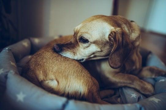 בעיות עור אצל כלבים